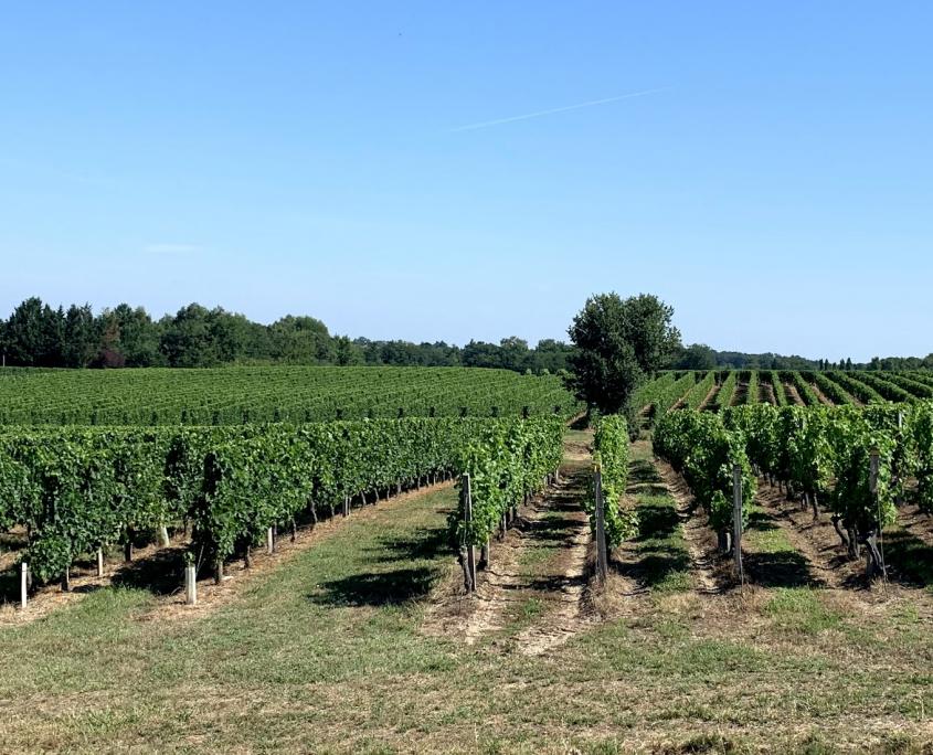 Wijnunie Vlaanderen Wijnimport selectie van een exclusief wijnaanbod