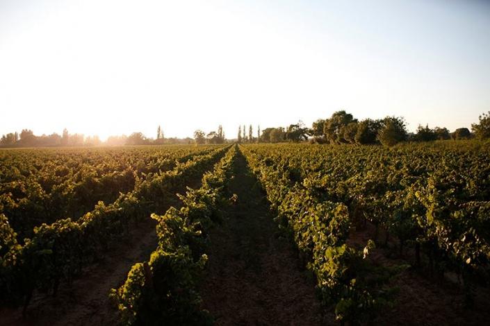 De Wijnunie Vlaanderen domeinen groene wijnranken van Chateau Coussergues